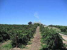 Barossa Valley Limo Wine Tours