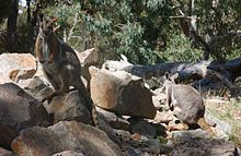 Cleland Conservation Park & Wildlife Park