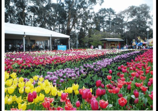 Floriade Canberra, Cantiknya Musim Semi di Ibukota Negeri Kangguru