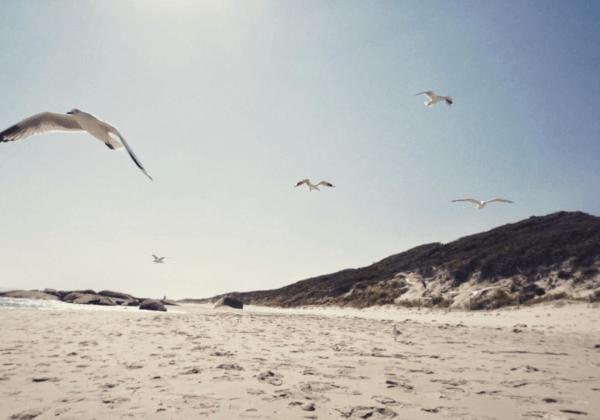 Liburan ke Rottnest Island, Pulau Wisata di Perth