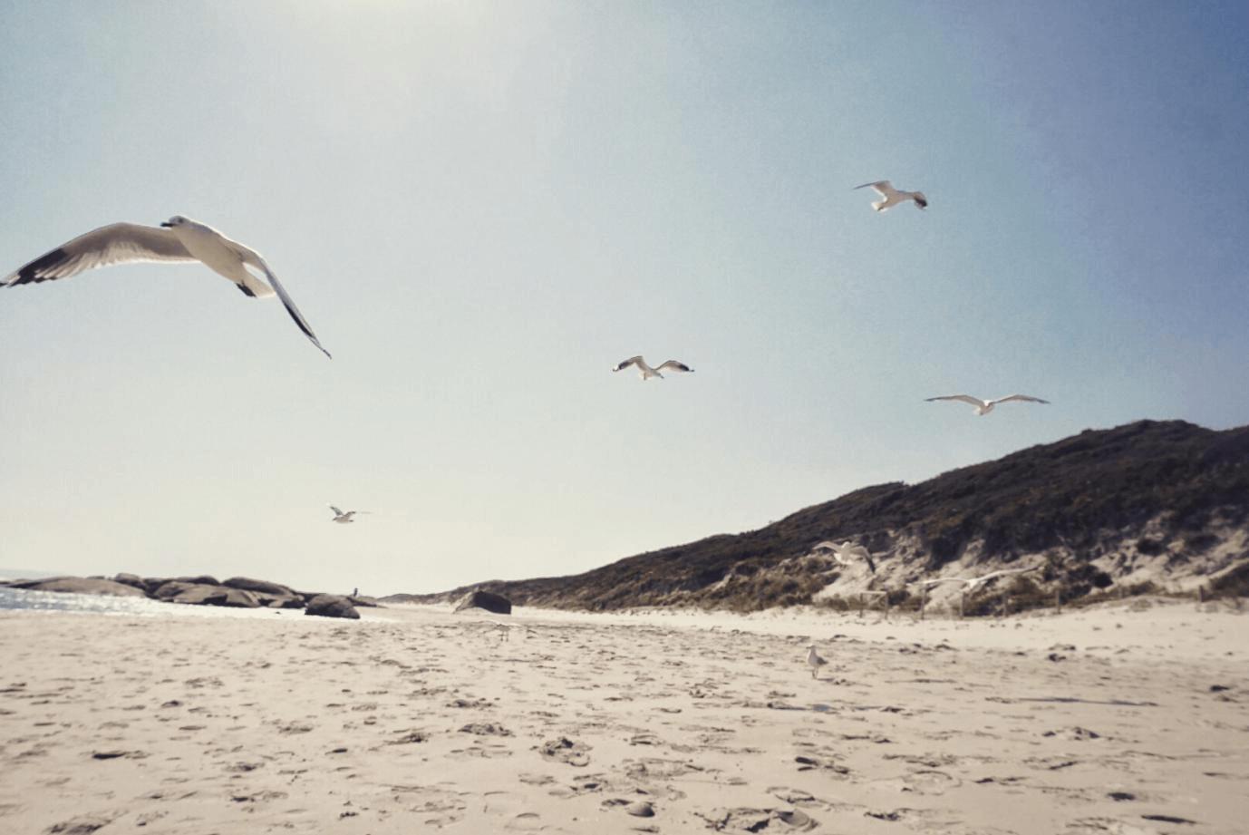 Rottnest Island: Liburan ke Pulau Wisata 30 Menit dari Perth