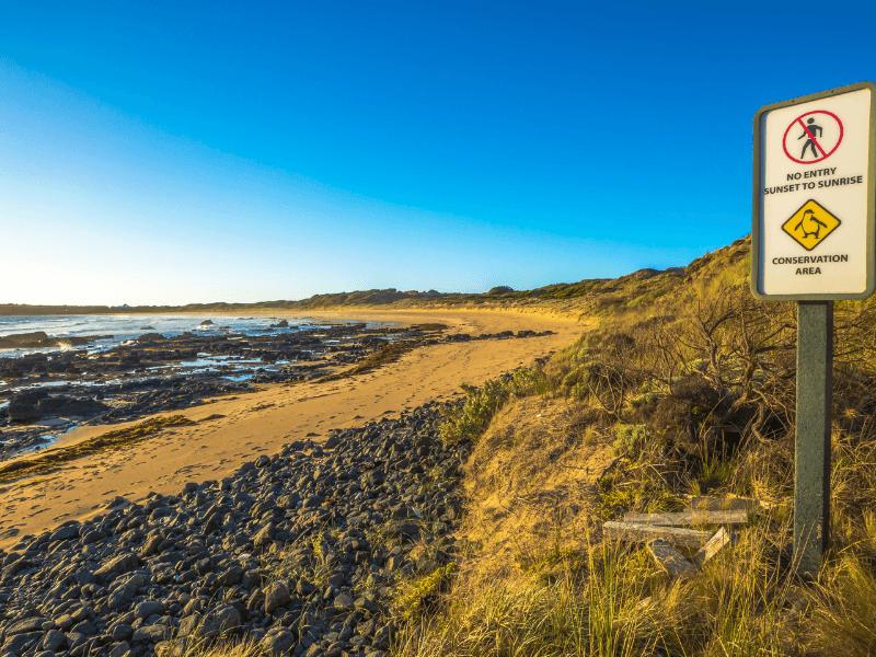 Area penguin di Phillip Island VIC