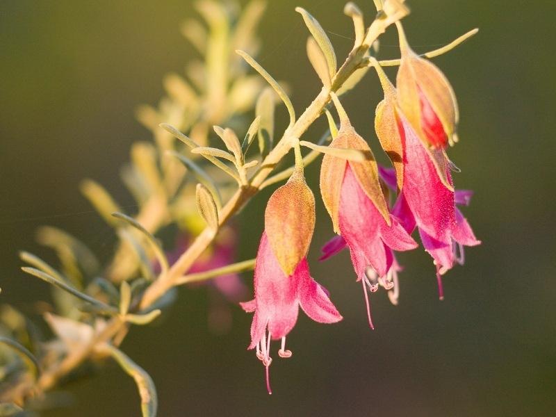 15 Flora dan Fauna Benua Australia yang Khas dan Unik