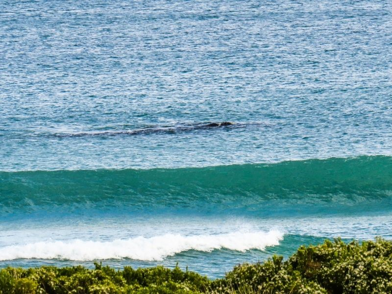 Great Ocean Road: Destinasi Wisata di Melbourne yang Ikonik