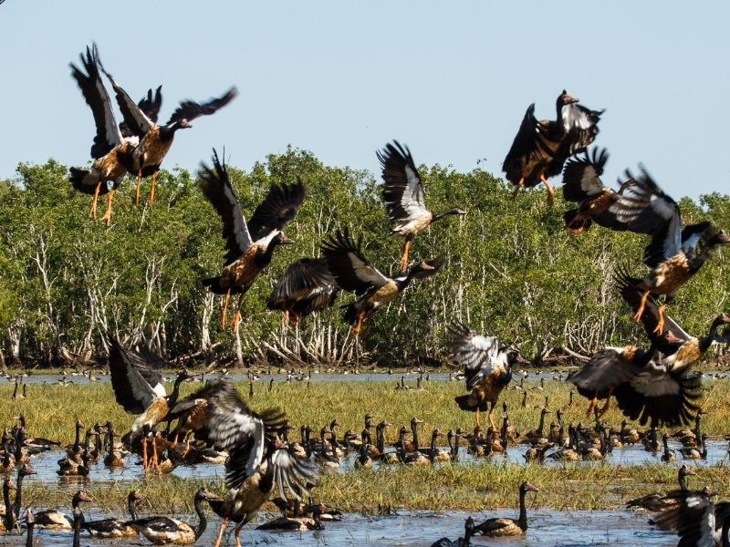 Kakadu National Park: Wisata Terkenal di Australia