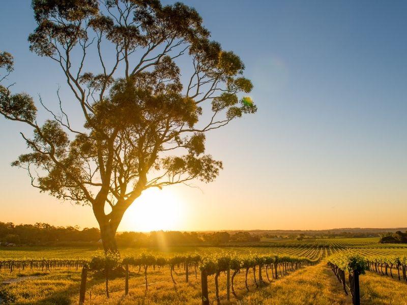 barossa valley australia selatan