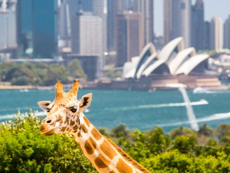 Backpacker ke Sydney: Tips dan Trik