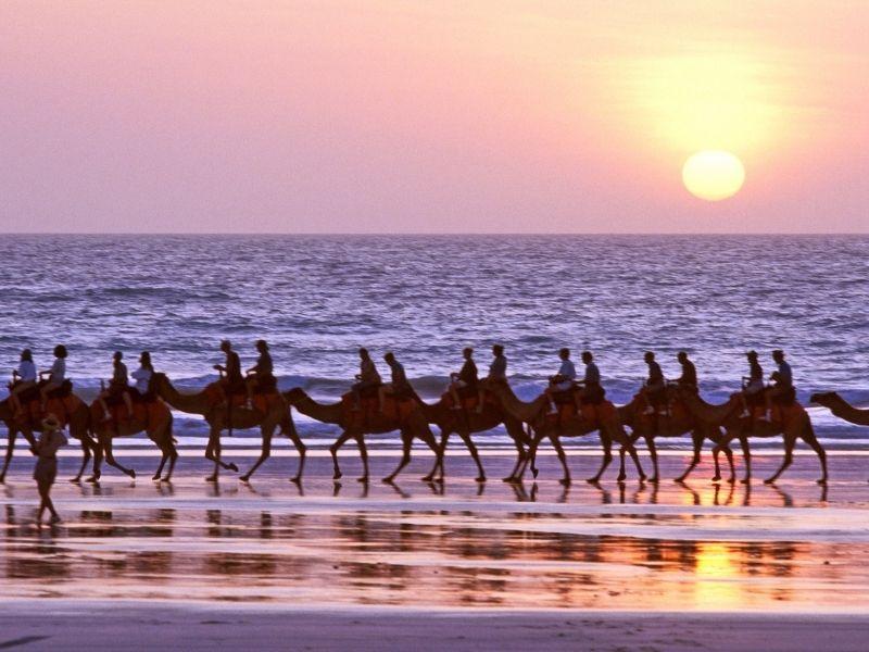 camel riding broome western australia